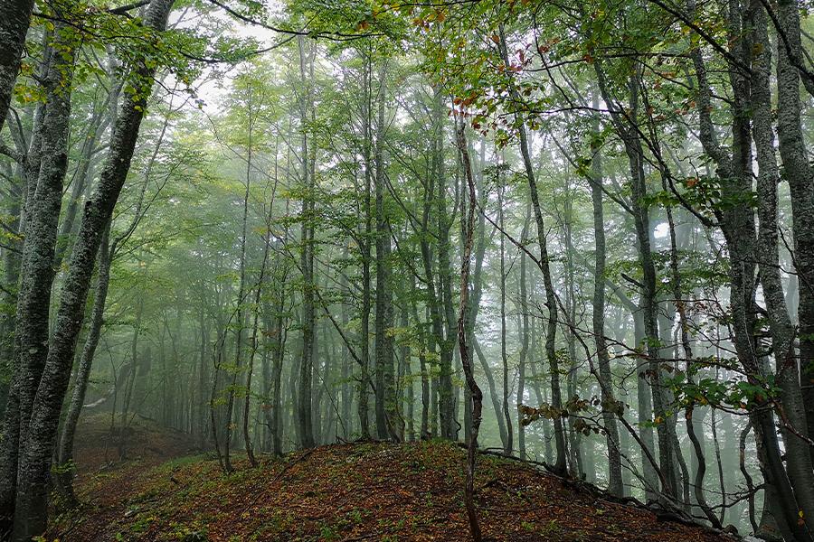 Protected area BiH