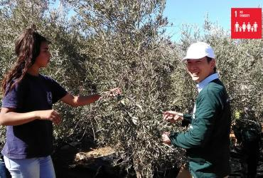 Takuma Haga (Japan), UN Volunteer Associate Programme Support Officer with UNRWA, at an olive farm at Al Walaja, during the advocacy event organized by the West Bank field office, harvesting olives with local volunteers.