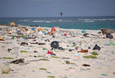 Plastic pollution is becoming a major environmental hazard for beaches and oceans.